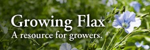 Growing Flax
